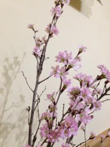 IMG_0212 啓翁桜